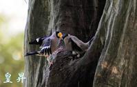 面白いフイ-ルドだ、数時間で数種の鳥が撮れるぞ。誠 - 皇 昇