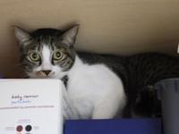 猫のお留守番 ぎんちゃん編。 - ゆきねこ猫家族