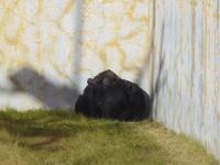静かな女の子達[神戸市立王子動物園] - a diary of primates