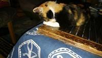 三毛猫ひかちゃん-93-今年もお世話になりました。 - 殿様の試写室