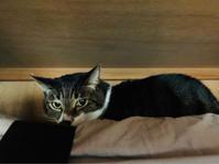 夫婦2人の年末 - いぬ猫フェレット&人間