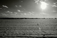 あけましておめでとうございます、今年も宜しくお願い致します。 - 写真家 永嶋勝美の「散歩の途中で . . . !」