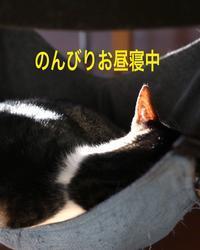 にゃんこ劇場「兄弟げんか」 - ゆきなそう  猫とガーデニングの日記