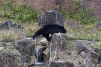 1月1日なり - 動物園へ行こう