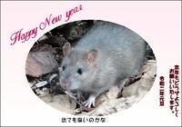 新年あけましておめでとうございます。 - 小さなお庭のある家(パート2)
