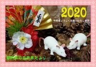 『2020年は金黒羽白(キンクロハジロ)から~♪』 - 自然風の自然風だより