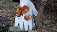 水晶山でキノコを採って食べた話 - 或岩松枝諏の一服