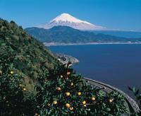 旅行事業部からのおしらせ・3月6日JAF会員様向けバスツアー - Hotel Naito ブログ 「いいじゃん♪ 山梨」