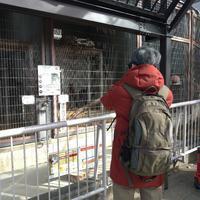 東山動植物園からの熱田神宮へ - 人生満喫中 ~ヨガとわんこ(シュナウザー)、その他いろいろ~