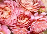 bouquet - カヲリノニワ