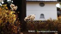 真如堂初詣の帰り - 写楽彩2