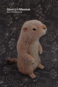 プレーリードッグ * Prairie dog 06 - … いづみのつぶやき