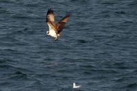 今年の初撮りは野鳥でした - スポック艦長のPhoto Diary