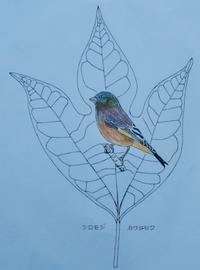 『#木の葉絵#leafart 』 白文字・河原鶸 - スケッチ感察ノート (Nature journal)