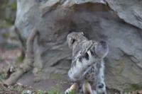 しっぽに注目 - 動物園へ行こう