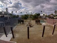 ゾウの森の住み心地はいかがですか - 動物園でお散歩