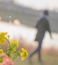 ✔ 春めく散歩道=熊本市・江津湖 - チャレンジ! 日々の散歩道