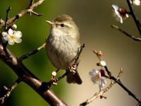 野鳥 - 野鳥鳴く自然風景