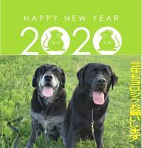 2020(令和二年) - Dogs, whimsical diaries, and we of shop