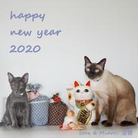 Happy new year 2020 - タイ猫とお昼寝。