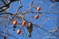 身近な野鳥の食欲(*^-^*) - 自然のキャンバス