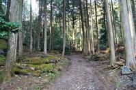 日吉大社に参詣(6)NHKの朝ドラ「まんぷく」のオープニングの森 - たんぶーらんの戯言