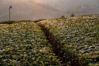 霜の朝 - toshi の ならはまほろば