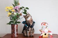 1月6日はイチローの日!(猫のお正月撮影会) - きょうだい猫と仲良し暮らし