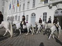 世界最古の馬術学校・スペイン式宮廷馬術学校 ~両親連れて海外旅行(オーストリア編)~ - 旅はコラージュ。~心に残る旅のつくり方~