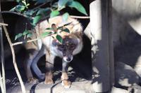 井の頭自然文化園2019年12月28日 - お散歩ふぉと2