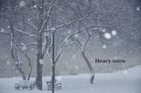 まとまった雪 - ハーブガーデン便り