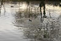 ripple - *Any*