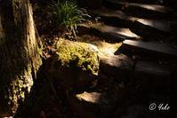 年末年始 / year end to new year - Seeking Light - 光を探して。。。