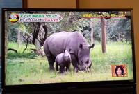 日本の名前が付けられたウガンダのシロサイの赤ちゃん! - 親愛なる犀たちへ