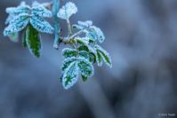 南紀にも霜はある - toshi の ならはまほろば