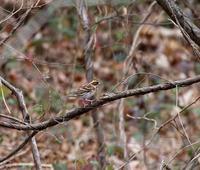 初撮りはMFであったが・・・ - 一期一会の野鳥たち