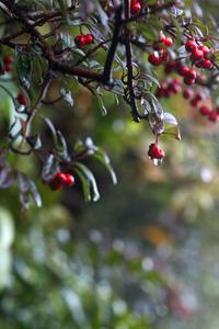 今日の空中庭園@池袋西武屋上雨上がり決死隊急げ - meの写真はザンス