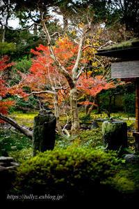 京都の秋2019(32) - Tullyz bis /R-D1ときどきM