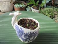 小さな粒のサボテンを動物鉢に - あるまじろの庭