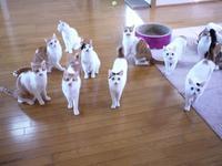 猫のお留守番 にゃーちゃんいーくんりゃんくんさんくんみーちゃんチロくんアイドルくんちびちゃんオッドちゃんグレムリンちゃん編。 - ゆきねこ猫家族