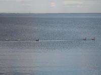 2019.12.10 サロマ湖 ピラオロ展望台 - ジムニーとピカソ(カプチーノ、A4とスカルペル)で旅に出よう