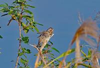 アリスイⅠ - 野鳥との出会い