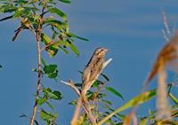 アリスイⅡ - 野鳥との出会い