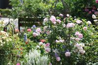 セプタードアイルの誘引2019 - my small garden~sugar plum~