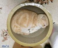 ほっこりとした猫たち~1月 - My favorite ~Diary 3~