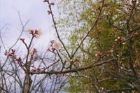 【ニトリ】美容家電のネイルケア - 美的生活研究所