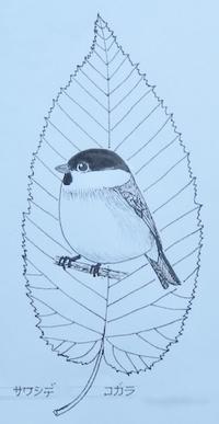 『#木の葉絵#leafart 』 沢柴・小雀 - スケッチ感察ノート (Nature journal)