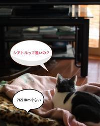 正月休み番外編 - ゆきなそう  猫とガーデニングの日記