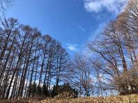 冬木立 - 風路のこぶちさわ日記