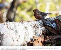埼玉県県民の森 2020.1.9(1) - 鳥撮り遊び